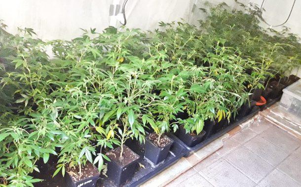 Una deflagració permet descobrir una plantació de marihuana en un domicili