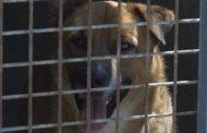 El CAAD ha acollit 305 animals entre gener i maig, 169 menys que ara fa un any
