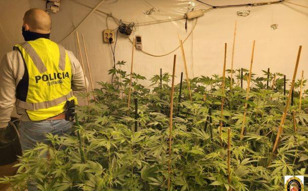 La Policia Municipal desmantella una plantació de marihuana al barri de Les Arenes